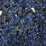 02_Grapes
