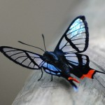 Beautiful butterfly // wunderschner Schmetterling